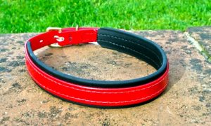 Medium Translucent Red Dog Collar With BETA® Black Underlay-0