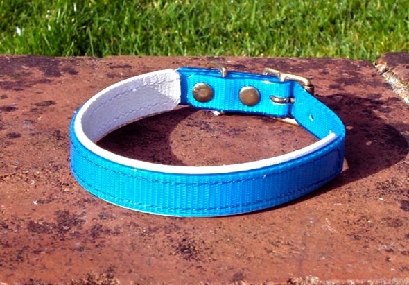 Small Translucent Mid Blue Dog Collar With BETA® White Underlay-0