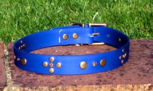 Large BETA® Blue Dog Collar With Rivets and Amber Rhinestones-0