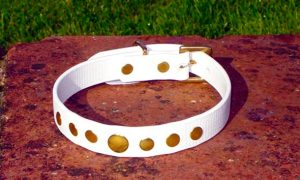 Small BETA® White Dog Collar With Rivets-0