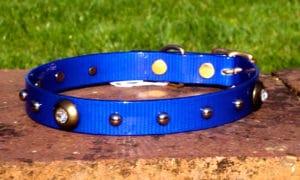 Medium Translucent Dark Blue Dog Collar With Spotlight Rivets and Domed Rivets-0