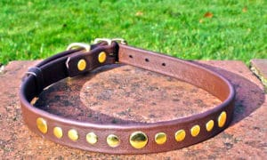 Large BETA® Brown Dog Collar With Brass Rivets-0