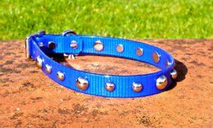 Medium Translucent Dark Blue Dog Collar With Domed Rivets-0