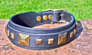 Large BETA® Black Dog Collar with BETA® Black Underlay-0