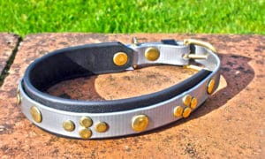 Medium Silver Dog Collar With BETA® Black Underlay and Rivets-0