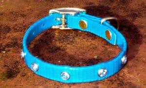 Extra Small Translucent Mid Blue Dog Collar With Blue Rhinestones-0