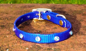 Extra Small Translucent Dark Blue Dog Collar With Blue Rhinestones-0