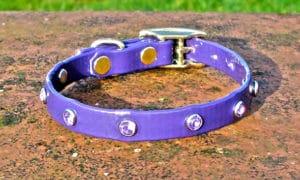 Extra Small BETA® Purple Dog Collar With Purple Rhinestones-0