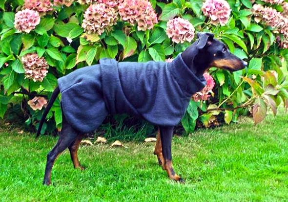 Manchester Terrier Fleece Coats-628