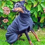 Manchester Terrier Fleece Coats-619
