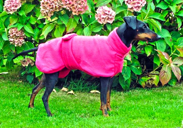 Manchester Terrier Fleece Coats-0