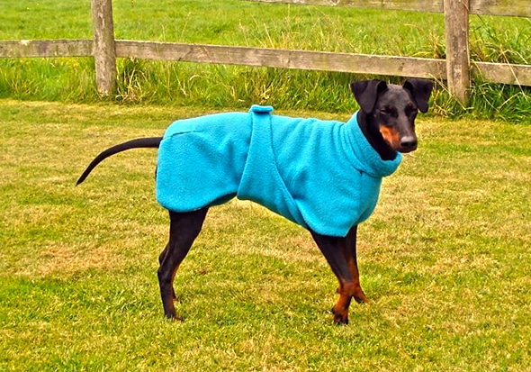 Manchester Terrier Fleece Coats-620