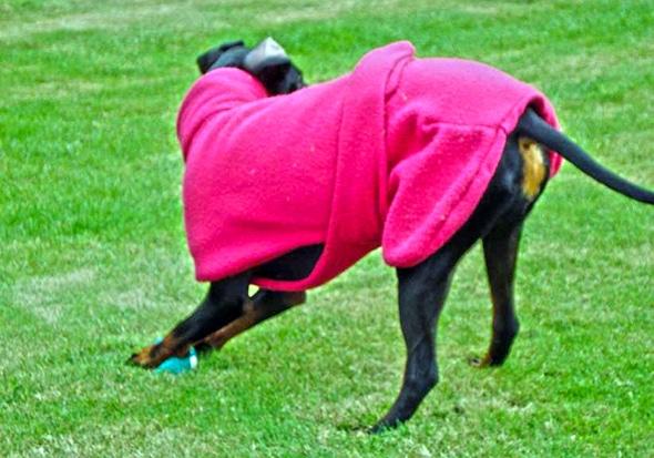 Manchester Terrier Fleece Coats-622