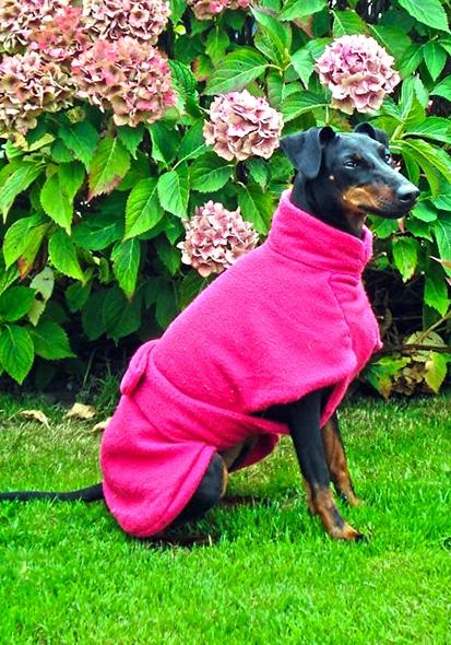 Manchester Terrier Fleece Coats-621