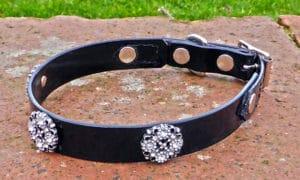 Small BETA® Black Dog Collar With Starlight Conchos-0