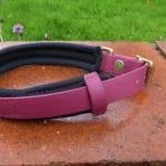 Agility Dog Collar-1347