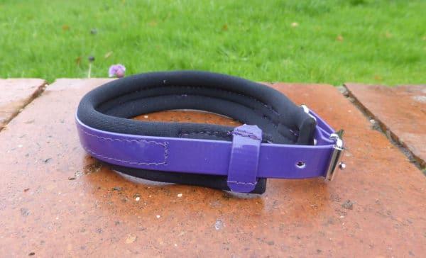 Agility Dog Collar-1348