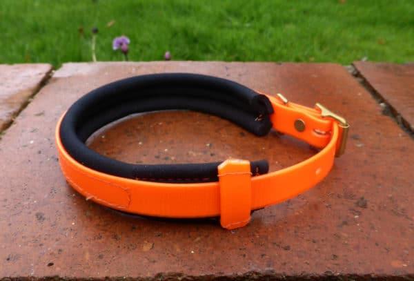 Agility Dog Collar-1354