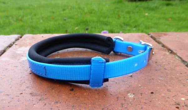 Agility Dog Collar-1355