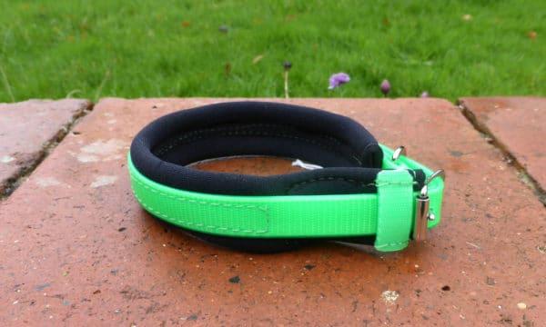 Agility Dog Collar-1356