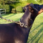 Martingale Collar and Lead Combination-1093