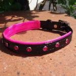 Duo Bling Dog Collar-1474