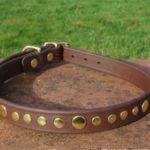 Bling Dog Collar-1514