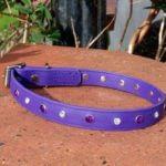 Bling Dog Collar-1517