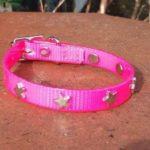 Bling Dog Collar-1522