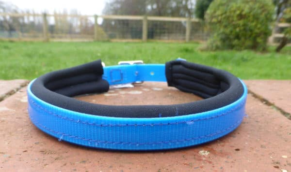 Padded Dog Collar-1381