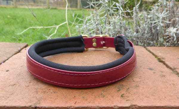 Padded Dog Collar-1382