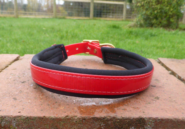 Padded Dog Collar-1386