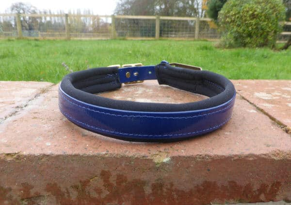 Padded Dog Collar-1387